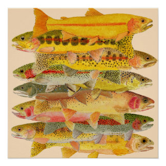 Stacked Deck- Trout Poster