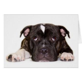 Staffordshire bull terrier Card R001