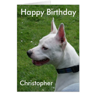 Staffordshire Bull Terrier Happy Birthday Card