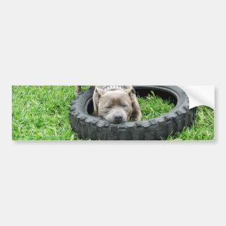 Staffordshire Bull Terrier, One Chomp, Bumper Sticker