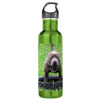 Staffordshire Bull Terrier Play Time, 710 Ml Water Bottle