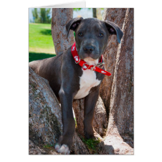 Staffordshire Bull Terrier puppy in a tree Card