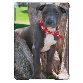Staffordshire Bull Terrier puppy in a tree Case For iPad Air