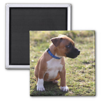 Staffordshire Bull-Terrier Puppy Magnet