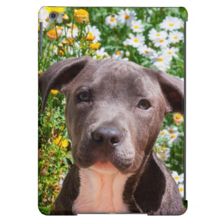 Staffordshire Bull Terrier puppy portrait iPad Air Cover