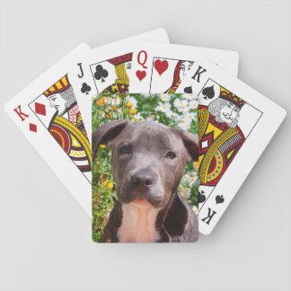 Staffordshire Bull Terrier puppy portrait Poker Deck