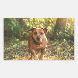 Staffordshire bull terrier rectangular sticker