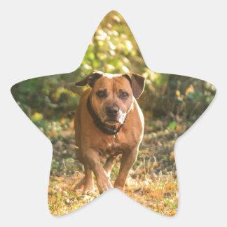 Staffordshire bull terrier star sticker