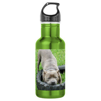 Staffordshire Bull Terrier Tyre Chomp, 532 Ml Water Bottle