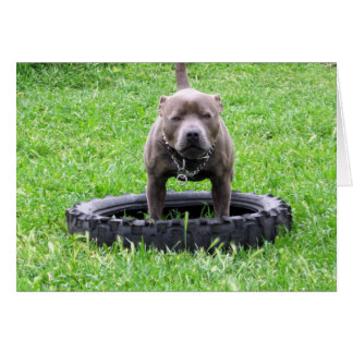 Staffy,_In Car Tyre,-Greeting_Card Greeting Card