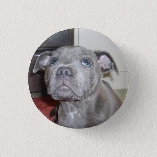 Staffy Puppy Love Eyes, Button Badge.
