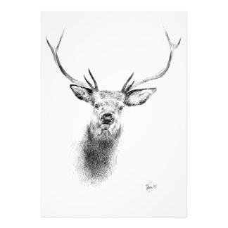 Stag 2 photo print