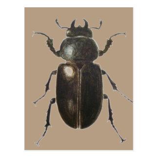 Stag Beetle 2011 Postcard