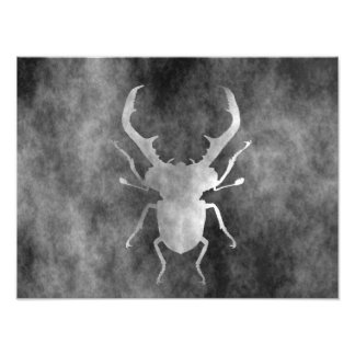 stag beetle photo print