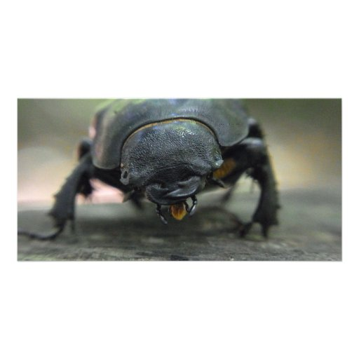 Stag Beetle Photo Cards