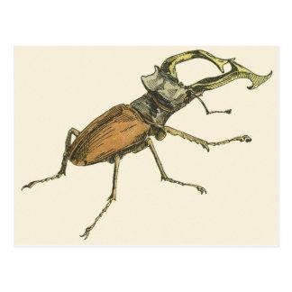 Stag Beetle Postcard
