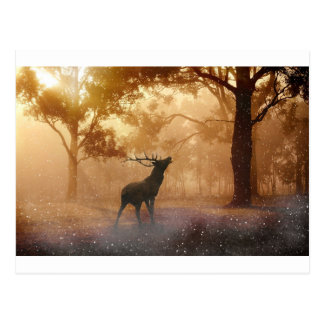 Stag in Mystical Forest Postcard