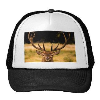 stag of richmond park cap