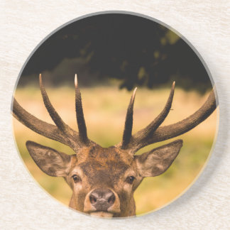 stag of richmond park coaster