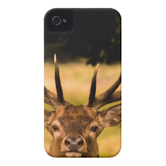 stag of richmond park iPhone 4 case
