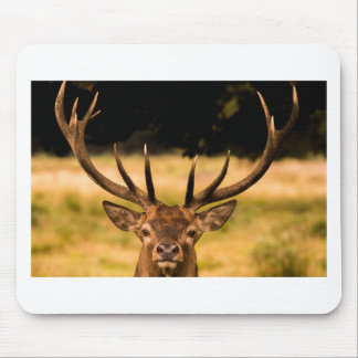 stag of richmond park mouse pad