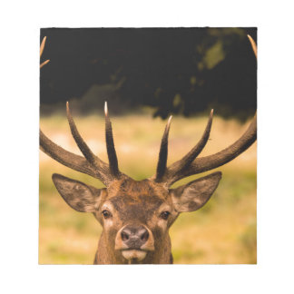 stag of richmond park notepad