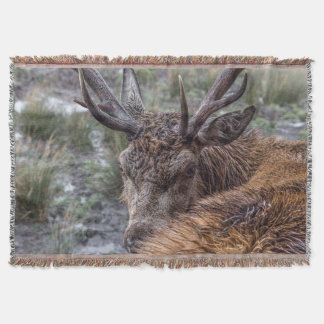 stag photograph blanket