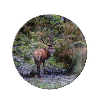 Stag photograph plate
