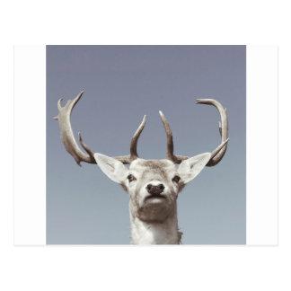 Stag prints stay Deer antlers Antlers Postcard