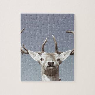 Stag prints stay Deer antlers Antlers Puzzle