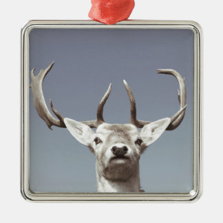 Stag prints stay Deer antlers Antlers Silver-Colored Square Decoration