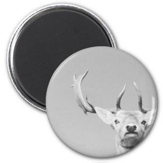 Stag prints stay Deer Magnet