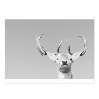 Stag prints stay Deer Postcard