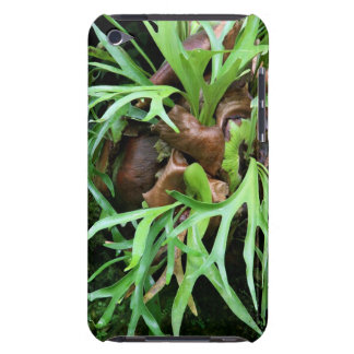 Staghorn Fern Case-Mate iPod Touch Barely There Barely There iPod Covers