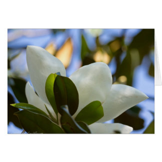 Stained Glass Sky Southern Magnolia Gifts Apparel Card