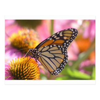 Stained Glass Wings Postcard