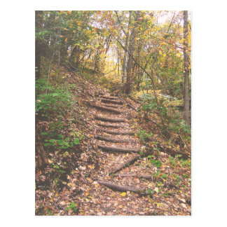 Stairs Into The Forest Postcard