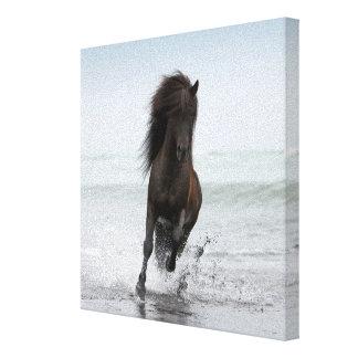 Stallion Running On Beach | North Atlantic Canvas Print