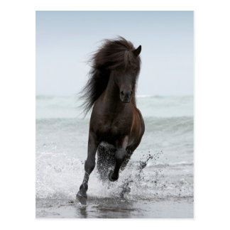 Stallion Running On Beach | North Atlantic Postcard