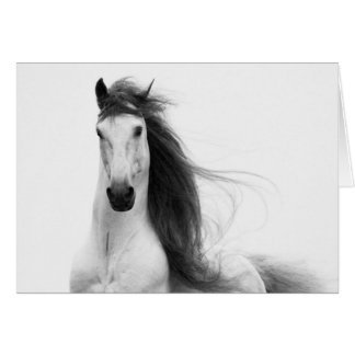 Stallion's Glory Horse Greeting Card