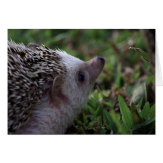 standard hedgehog card