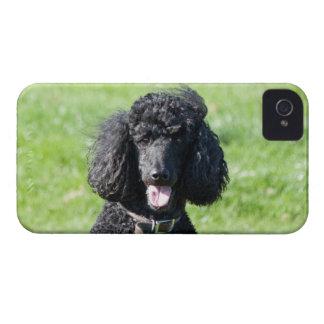Standard Poodle dog black beautiful photo portrait iPhone 4 Cases