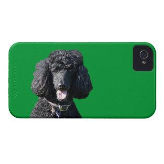 Standard Poodle dog black beautiful photo portrait Case-Mate iPhone 4 Case