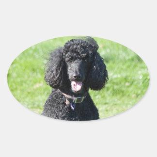 Standard Poodle dog black beautiful photo portrait Oval Sticker