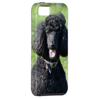 Standard Poodle dog black beautiful photo portrait Tough iPhone 5 Case