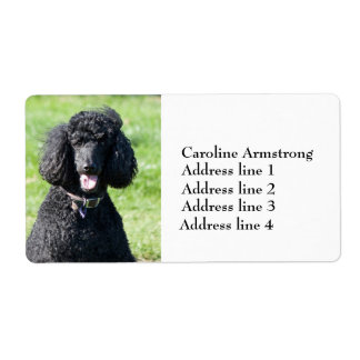 Standard Poodle dog black, custom address labels