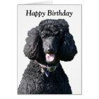 Standard Poodle dog photo happy birthday card