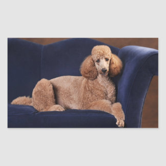 Standard Poodle on Blue Velvet Loveseat Rectangular Sticker