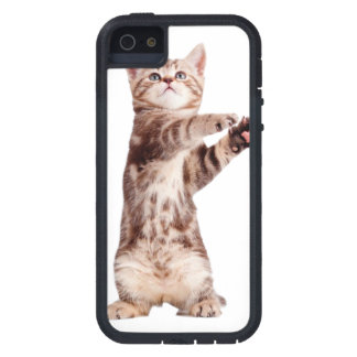 Standing cat - kitty - pet - feline - pet cat cover for iPhone 5