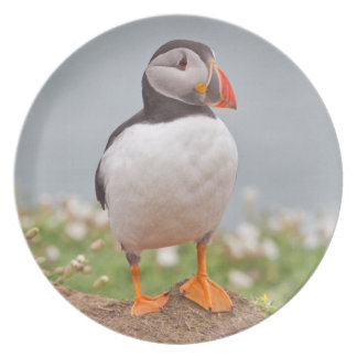 Standing Proudly Puffin Dinner Plates